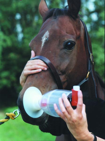 WDT Inhaliergerät Equine Haler